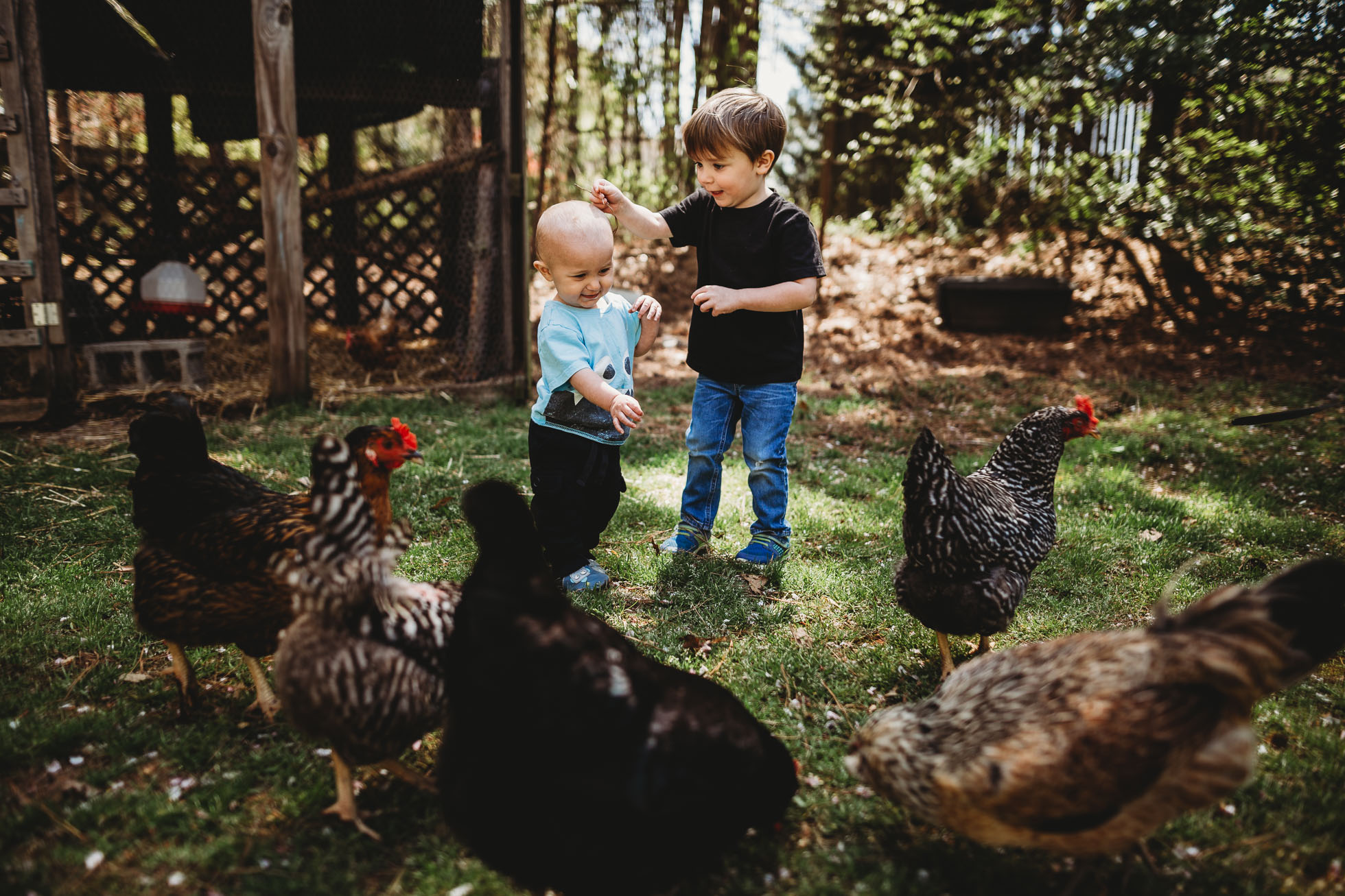 two boys playing with chickens